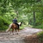 Excursions-Horseback-Riding-Mountains