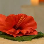 Photo-Gallery-Sensoria-Spa_G4-2